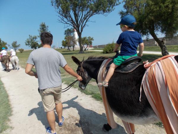 Ballade à dos d'âne à Saint-Martin ile de ré @mamanaubalcon