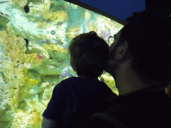L'aquarium de la Rochelle