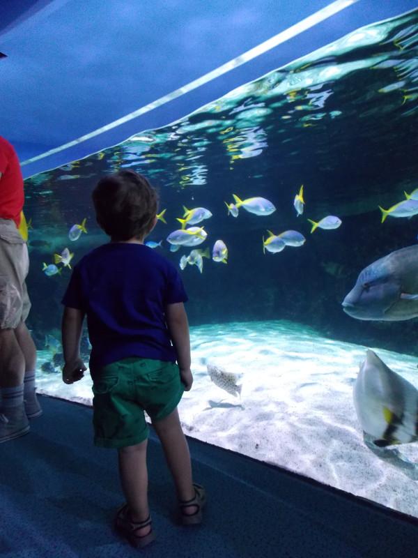 Dans l'aquarium de la rochelle